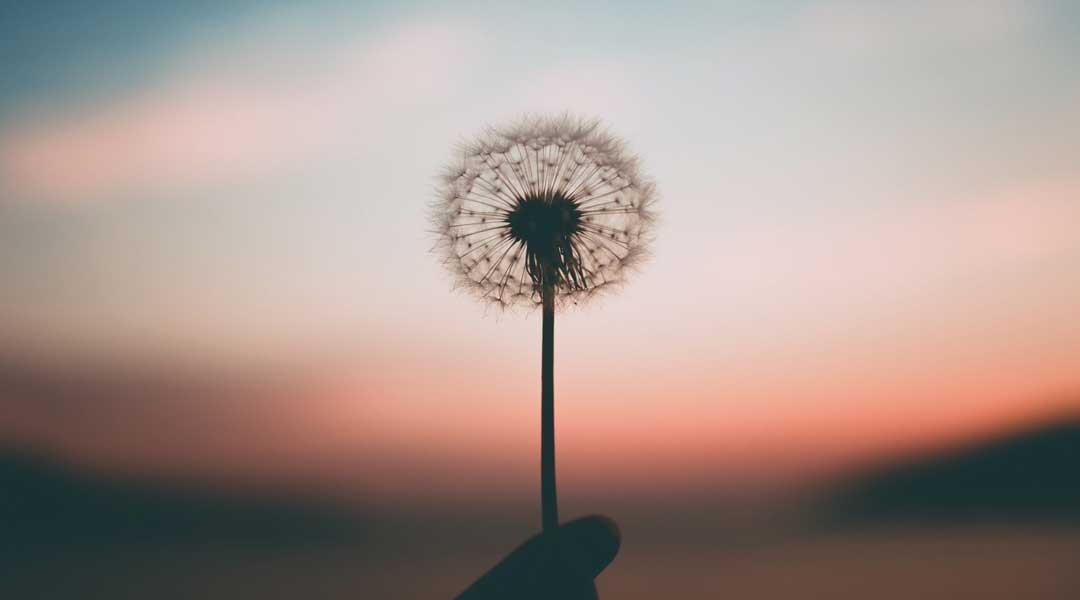 ¿Qué es el Mindfulness? Historia y significado